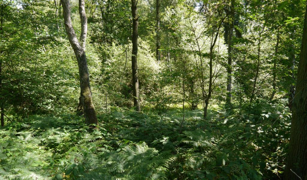 Naturschutzgebiete Rüden Heide